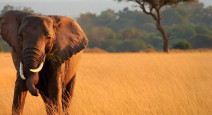Продолжение путешествия по Кении