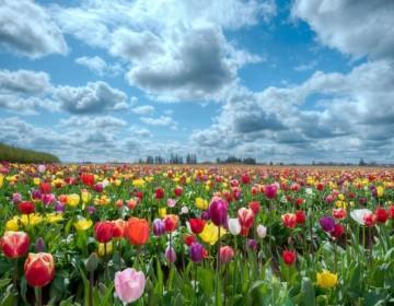 Netherlands_01