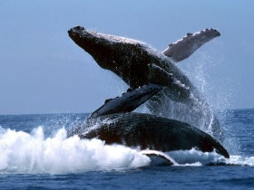 whales_4
