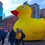 manchester-duck-race